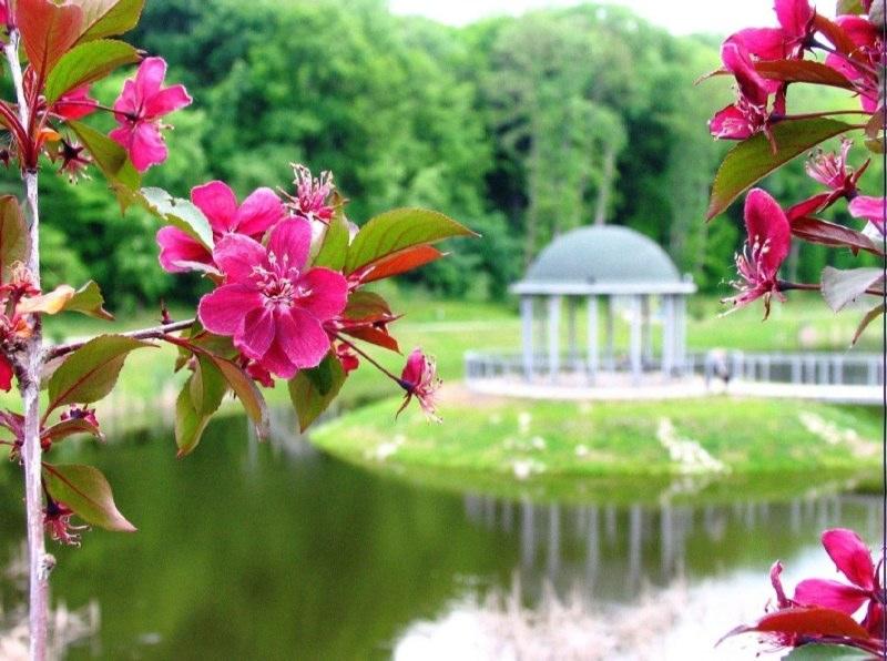 http://www.feofaniya.kiev.ua/site/assets/files/3568/flora-2.jpg